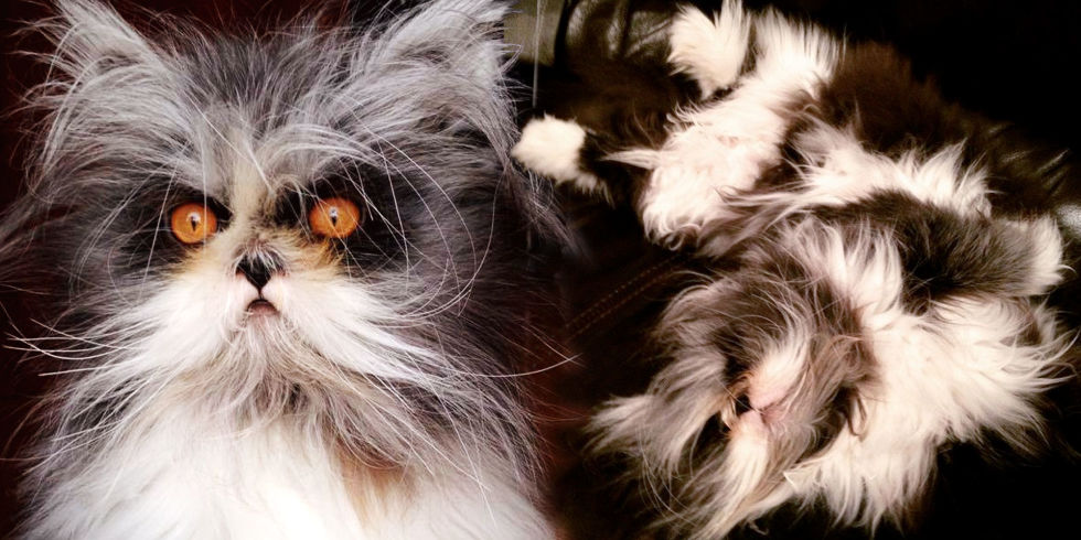 "This Cat With ""Werewolf Syndrome"" Is the Fluffy Feline Overlord You've ..."