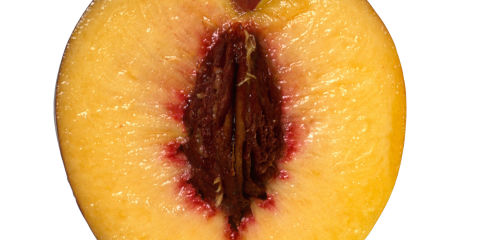 what should a vagina look like